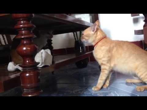 Funny Cats Compilation 2015 - Cats fighting