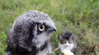 Летнее видео. Сова Ива и кот Мурлок гуляют в поле, собирают грибы