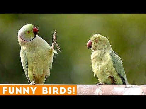 Funny Parrot & Bird Videos Weekly Compilation December 2018 | Funny Pet Videos