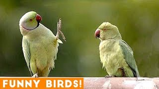Funny Parrot & Bird Videos Weekly Compilation December 2018 | Funny Pet Videos thumbnail