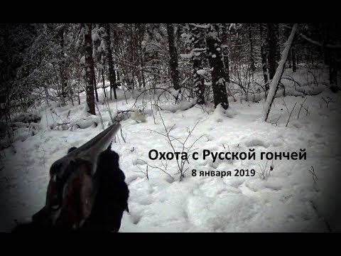Охота с Русской гончей на зайца 8 01 19
