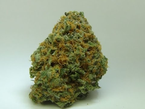 Dragon Fruit Strain Review! Medical Cannabis Review