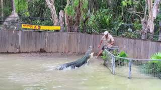 Attacked by saltwater croc show at Hartleys Crocodile Adventures!!!