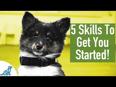 Puppy Training At 8 Weeks - Professional Dog Training Tips