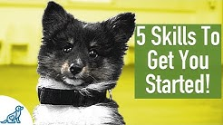 8 Week Old Puppy Training - 5 Exercises To Get You Started!