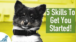 8 Week Old Puppy Training  5 Exercises To Get You Started!