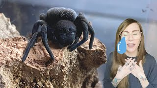tom patterson made me cry (unboxing tarantulas)