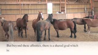 Les chevaux, modèles de transversalité (Horses & Transversality)