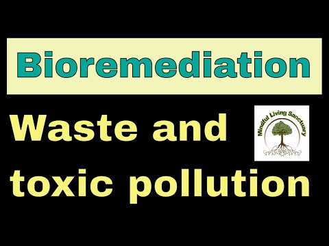 Bioremediation and toxic pollution household waste