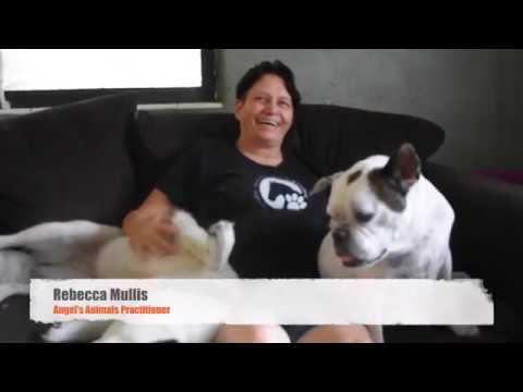 Canine Massage Online Certification Course Holistic Animal