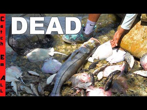 1,000s Of FISH DEAD! **Miami FL Biscayne Bay**