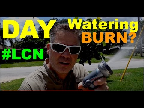 Cooling A Heat and Drought Stressed Lawn :: Day Watering