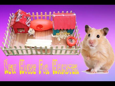 Baby HAMSTER   làm nhà mới cho hamster bằng que tre   New House For Hamster