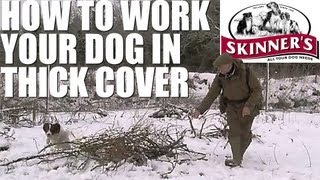 Gundog Training Tips - How To Work Your Dog In Thick Cover