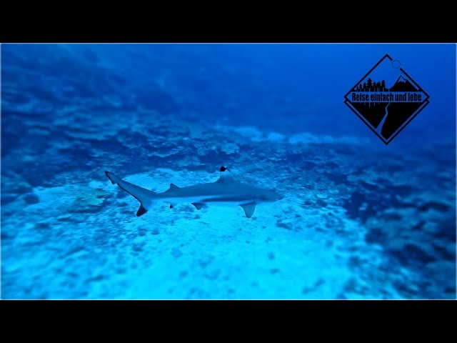 Tauchen am Nua Shark Point | Wakatobi | Indonesien • Vlog #81