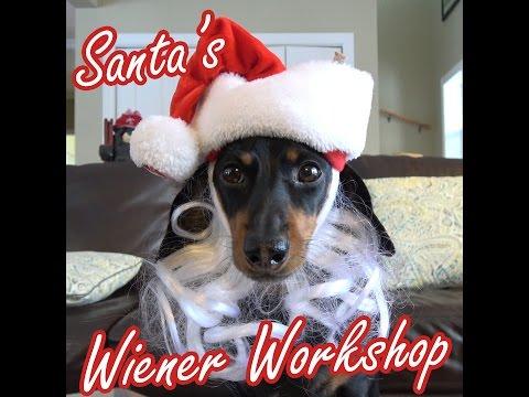 Santa's Wiener Workshop with Crusoe & Oakley the Dachshunds
