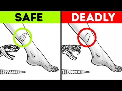 Thumbnail: 17 IMPORTANT SURVIVAL HACKS THAT CAN SAVE YOUR LIFE