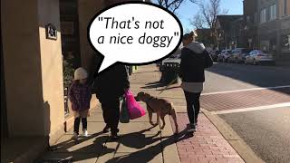 """The Pit Bull Experiment - How will the public react to this """"aggressive"""" breed?"""