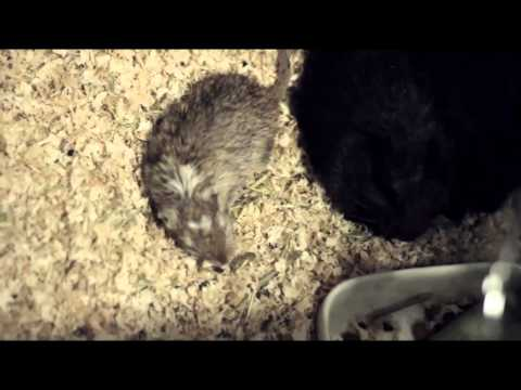 Can Gerbils Live With Other Animals