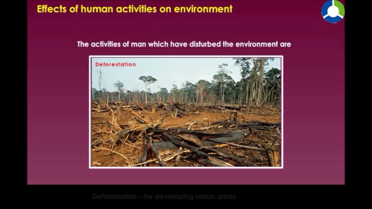 the effect of human activities to Humans impact the environment in several ways common effects include decreased water quality, increased pollution and greenhouse gas emissions, depletion of natural.