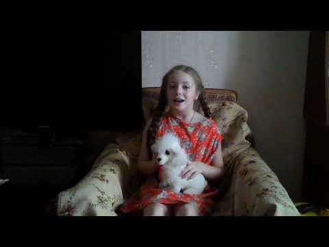 Песенка о собаке.
