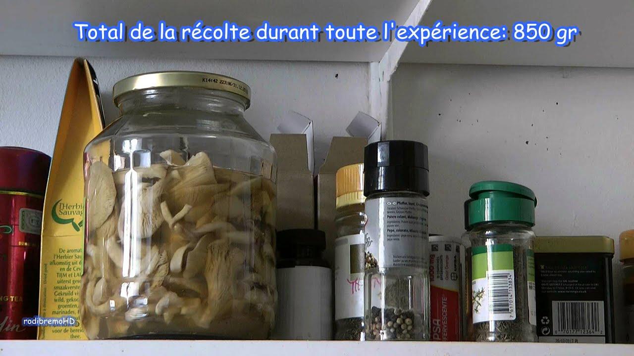 Faire pousser des Pleurotes BIO (vidéo 3), culture maison de champignons - YouTube