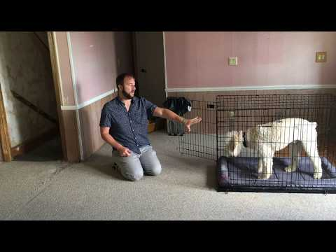 Tips to Help Stop Bud's Separation Anxiety