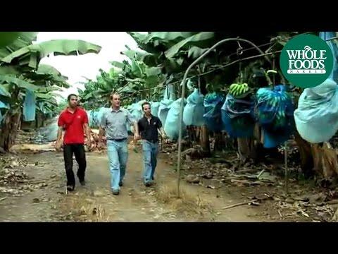 Earth University Bananas | Company Info | Whole Foods Market