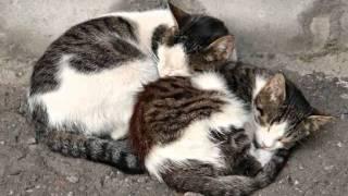 HOMMAGE AUX CHATS DES RUES QUI LUTTENT AU JOUR LE JOUR(TRIBUTE STREET CATS)