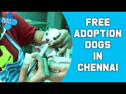 Best Quality Free Adoption Dogs In Chennai | Blue Cross Of India | Free Adoption | Crazy Pets Tamil