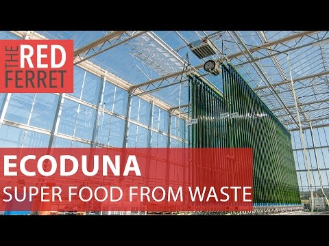 Ecoduna-new micro-algae tech produces super food from waste [Special Report]