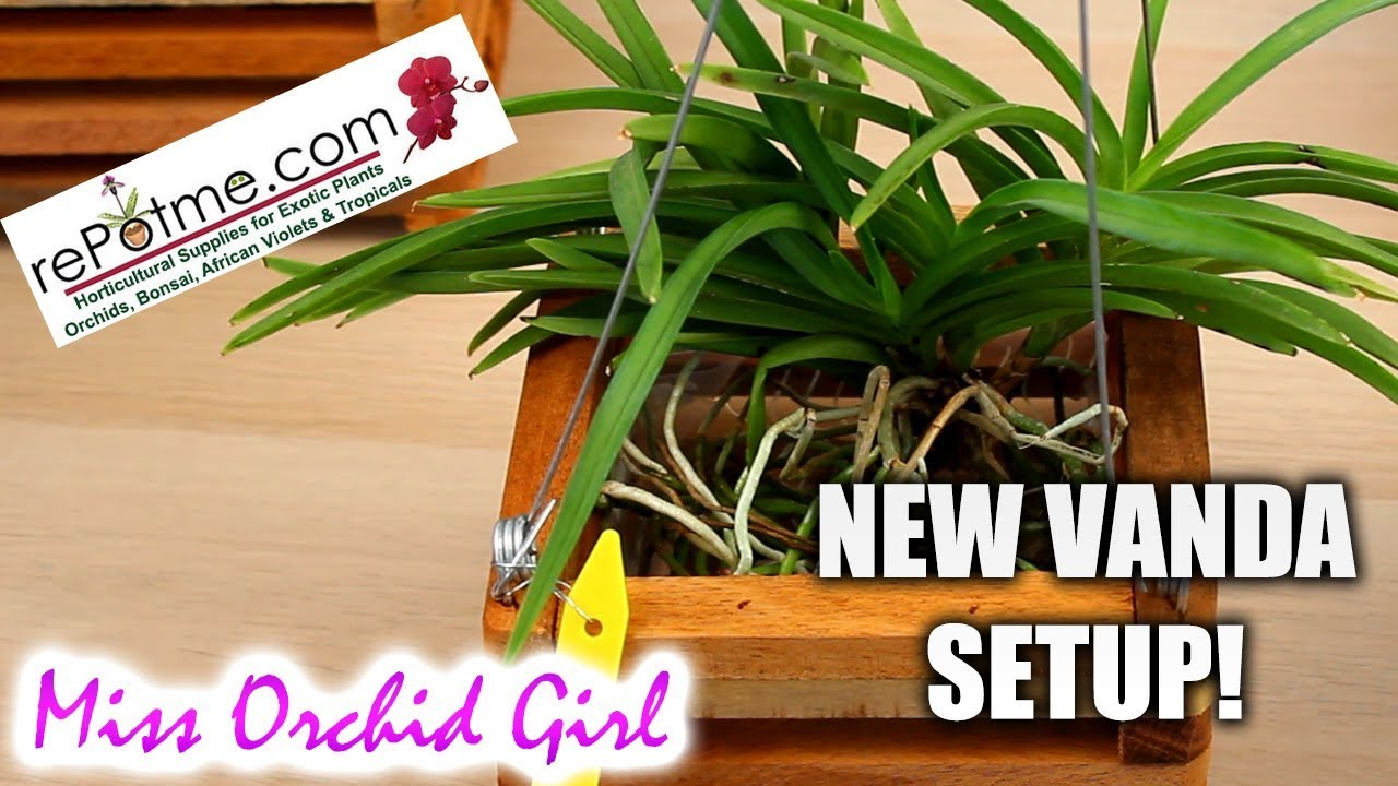 Potting Vanda Orchids In Wooden Baskets With Liner Powered By Repotme