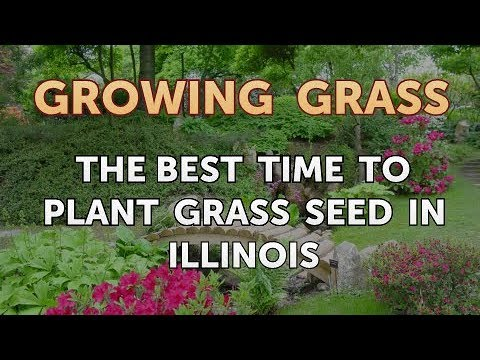 Attirant The Best Time To Plant Grass Seed In Illinois