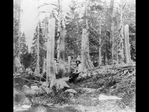 The Donner Camp...the Alder Creek Camp Site, Nevada County, California