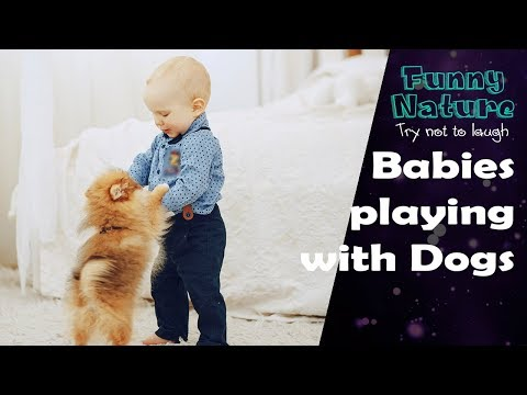 Dogs playing with Baby NEW - FunnyNature