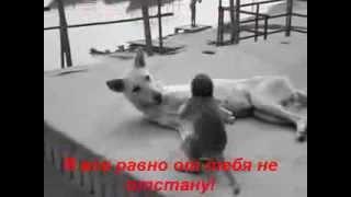 Собака и обезьянка.Дай, молочка!