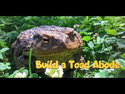 Young gardener activities – build a toad adobe