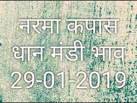 Mandi Bhav 29-01-2019 // Narma Bhav // Kapas Mandi Bhav // Dhaan Mandi Rates Aaj ka