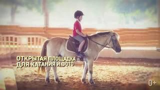 Смотреть видео Иппосфера – международная конная выставка в Санкт-Петербурге онлайн