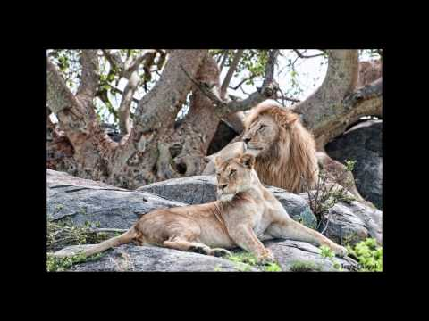Africa Safari 2015 with Shutter Tours in HD