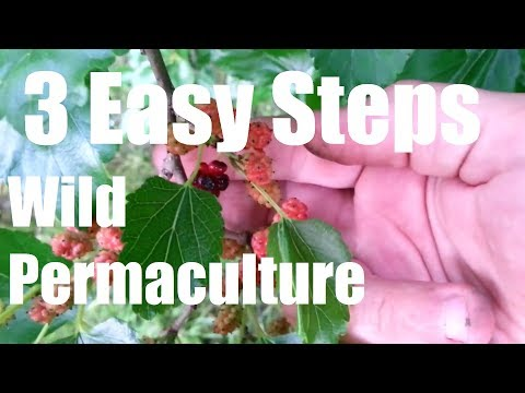 How To Create A WILD Permaculture Food Forest - 3 Easy Steps