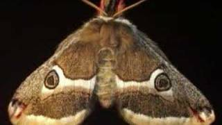 Amazing Moths Animated Slideshow