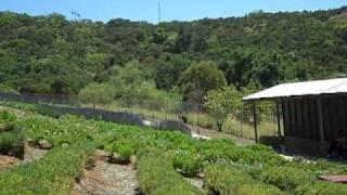 Keys Creek Lavender Farm   Valley Center, California