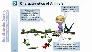 Rapid Learning: Animal Diversity - Animal Origin