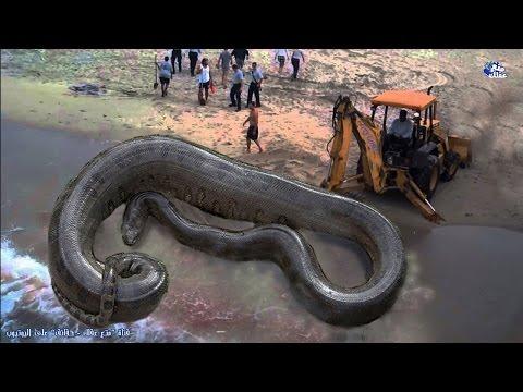 حقائق رهيبة ومخيفة عن الثعابين   مقطع مرعب