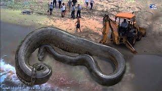 حقائق رهيبة ومخيفة عن الثعابين | مقطع مرعب