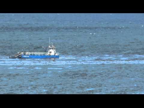 Kelp Cutter Boat
