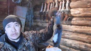 Охота на белок видео Якутия как снимать шкуру
