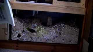 Eiskalte Killermäuse zerfetzen 60-jähriges Killerblatt