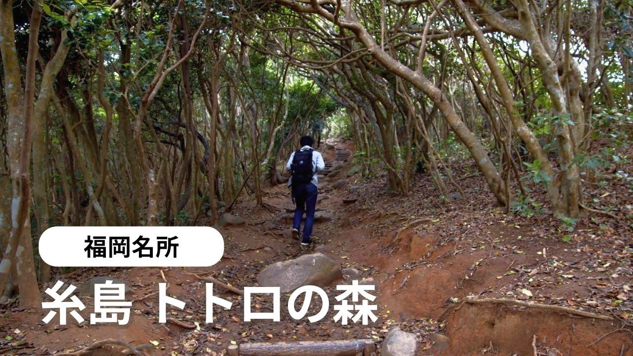福岡名所 糸島トトロの森、玄海国定公園「芥屋大門公園」へ